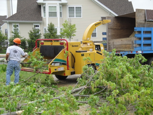 Affordable tree services Houston area