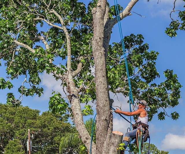 Local Tree Removal Services