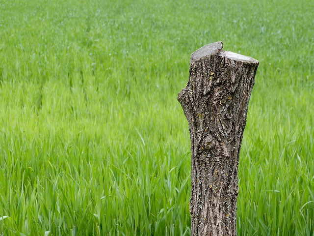 Tree And Stump Removal Cost